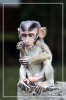Tough Little Monkey by aajohan