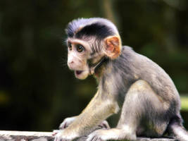 Baby Monkey by aajohan