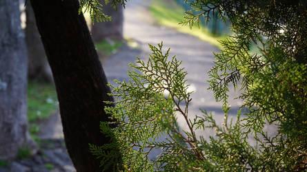 Pine close up by AmazingDX