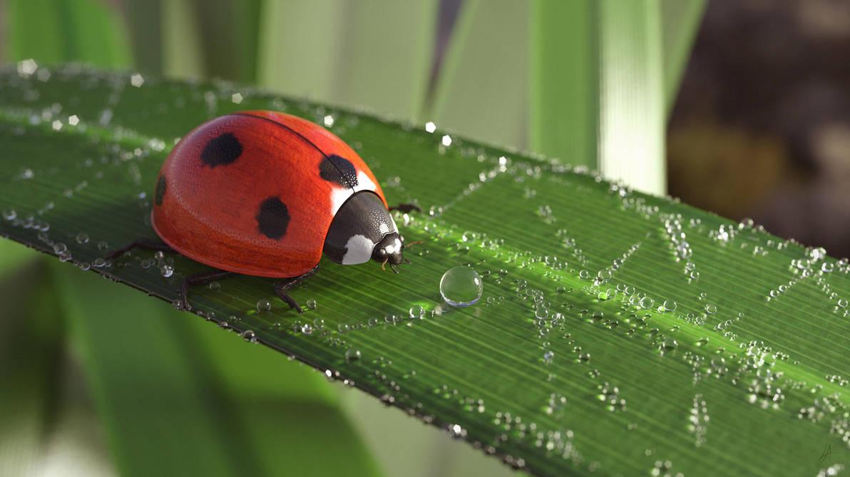 Seven-spot Ladybird (Coccinella Septempuctata) by Avhaz