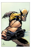 Wolverine colors by JohnTimms