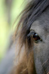Horse by lurker-