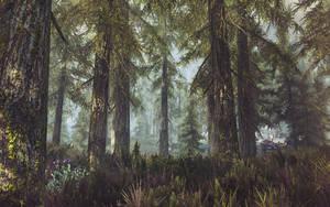 A walk through the woods- Skyrim by WatchTheSkies45