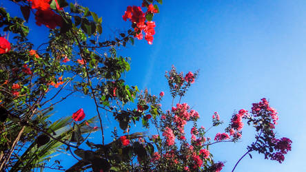 Spring: Flower Sacrifice. by WatchTheSkies45