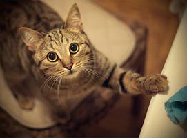 My cat by Vurtov