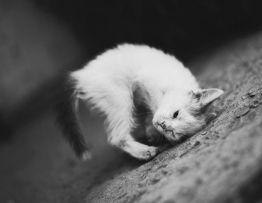 kitty by Vurtov