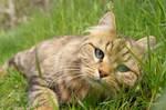 Cat model by svenskalovenska