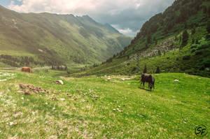wild horses by Man90Ray