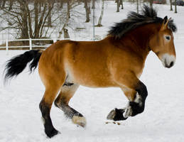 Horse Canter by peachesrox-stock