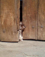 Wha is that at my bower door? by Kemendil
