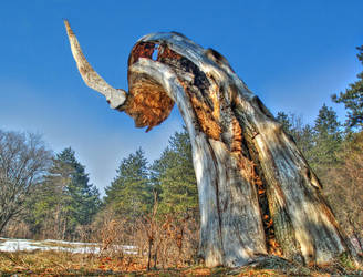 Horn by Kemendil