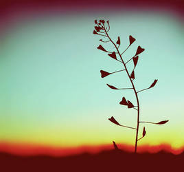 lover flower by julkusiowa
