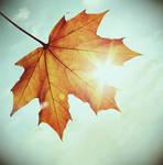 colours of autumn by julkusiowa