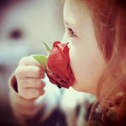 red rose. by julkusiowa