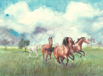 Wild Horses by In-The-Distance