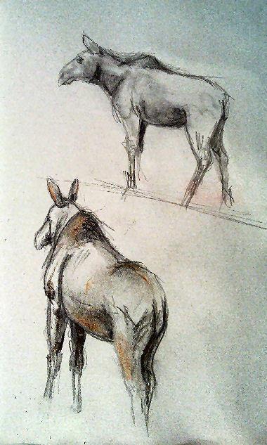 Sketch Emmen zoo Moose 2 by Skarbog-Sketch