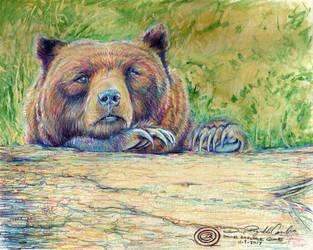 Bear Hug by DRagsdale