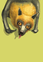 Indian flying fox by SuperGiantBird
