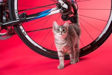 Cat and Bike by IllustratedEye