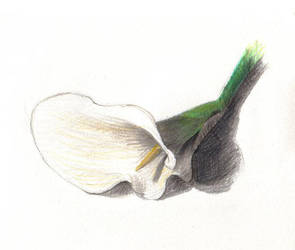 Lilly by Lunamatic