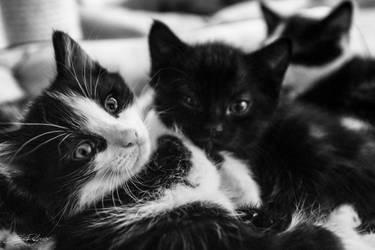 Black and White Kitten by x-Tsila-x