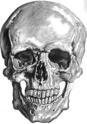 Human Skull by slipknotcrow