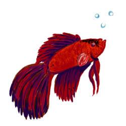 Betta betta fish fish by KyrusRose
