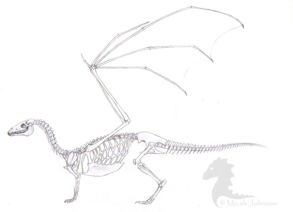 Pern Dragon Skeleton by bronze-dragonrider
