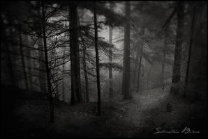 Dark by sebbri