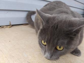 Random Cat by Lovable-Peril