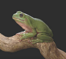 tree frog 2 by Doctor-Frog