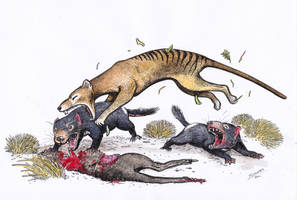 Thylacine hunting Tas devils by Snake-Artist