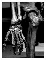 Skeleton by cookedart