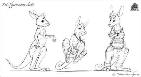 Real Kangaroo anatomy sketches by DekabristMouse