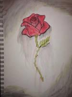Rose by warrior-princess46