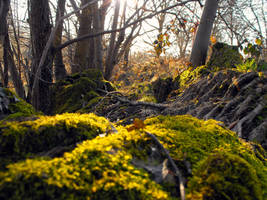Moss and Trees by River Hafren by linandara