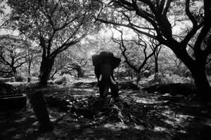 elephant 1 by anupjkat