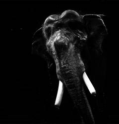 elephant at guru by anupjkat