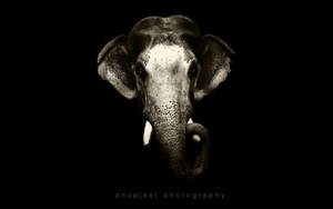 Elephant head by anupjkat