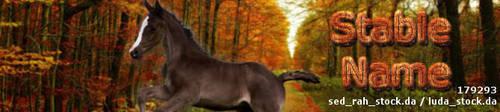 FoalBANNER-SET by elloisejorritsma