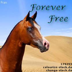 ForeverFreeSET by elloisejorritsma