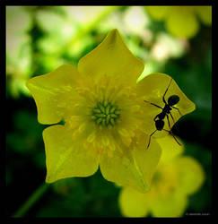 yellow flower and the ant by damdakisuvari