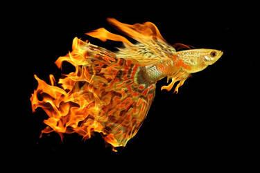 Flaming Skyfish by Jakari