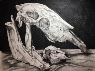 Boneyard by Kuava