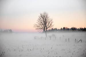 Lonely tree by RavensLane