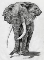 Elephant by Birdynum-num