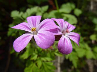 Pink II by snowangel591