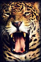 Biiiiiiiig Yawn by NaturePunk