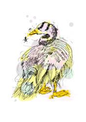 Duck by meylersmemoirs