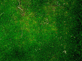 Grass texture by FRIDGEOBABAR